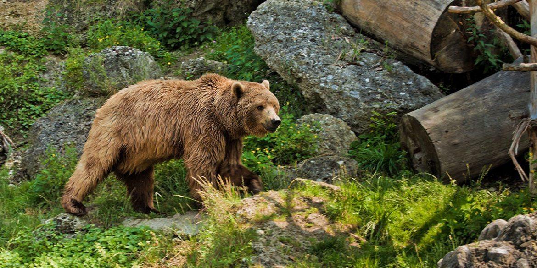 Zoos & Wildparks - Ausflugsziele im Salzburger Land